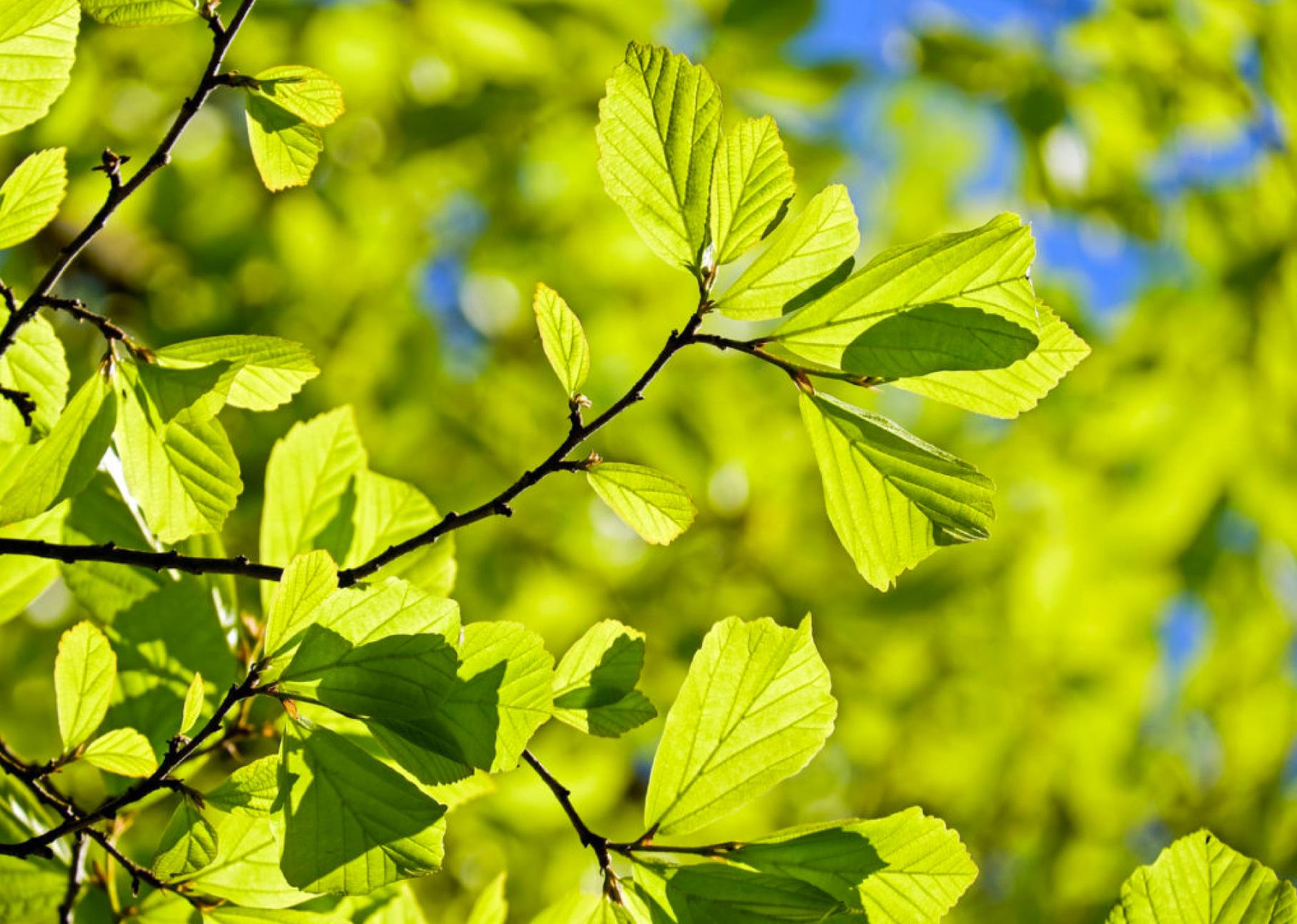 BLOG - Minnesota Tree Experts